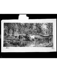 Woodland Pool, Photographs 3C38321V by Moran, Peter