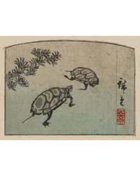 Kame, Photograph 00843V by Andō, Hiroshige