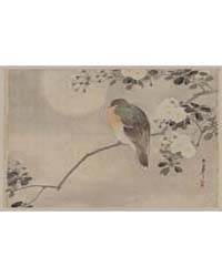 Bird Perched on a Branch of a Blossoming... by Library of Congress