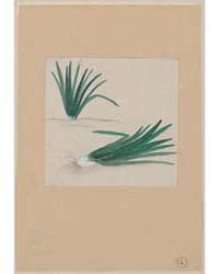 Scallions with Plant Growing in the Back... by Library of Congress