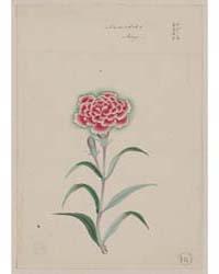 Nadeshiko, May, Photograph 01207V by Library of Congress