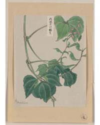 Mame, Pea or Bean Plant Showing Vine, Le... by Library of Congress