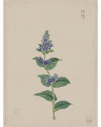 Blue Blossoms on Stalk with Leaves, Phot... by Library of Congress
