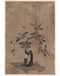 Saru No Hanaike Ni Biwa, Photograph 0157... by Utamaro II