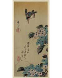 Ajisai Ni Kawasemi, Photograph 02023V by Andō, Hiroshige