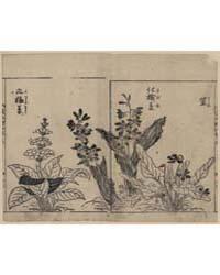 Violets, Arrow Arum(?), and Primrose, Ph... by Tachibana, Yasukuni