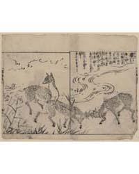 Deer, Two Bucks Fighting, Next to a Stre... by Tachibana, Morikuni