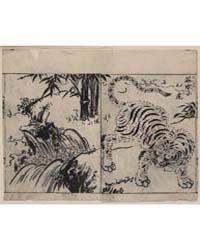 Tiger Near a Cataract, Photograph 02426V by Tachibana, Morikuni