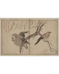 Kashidori Fukurō, Photograph 02507V by Kitagawa, Utamaro