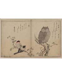 Mimizuku Uso, Photograph 02508V by Kitagawa, Utamaro