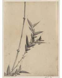Bamboo Shoots, Photograph 02803V by Katsushika, Hokusai