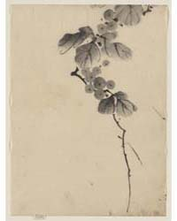 Branch with Leaves and Berries, Photogra... by Katsushika, Hokusai