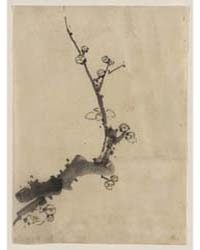 Fruit Tree Branch with Blossoms, Photogr... by Katsushika, Hokusai