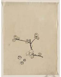 A Tree Branch with Blossoms, Photograph ... by Katsushika, Hokusai
