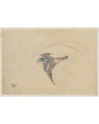 A Bird Flying to the Left, Seen from Abo... by Katsushika, Hokusai