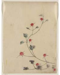 Small Red Blossoms on a Vine, Photograph... by Katsushika, Hokusai
