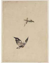 Butterfly and Moth, Photograph 02834V by Katsushika, Hokusai