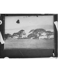 Travel Views of Japan, Photograph 7A1015... by Genthe, Arnold