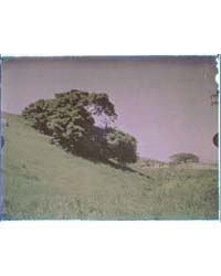 California Landscape of Grass-covered Hi... by Genthe, Arnold