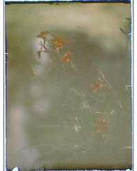 Flowers, Photograph 7A17893R by Genthe, Arnold