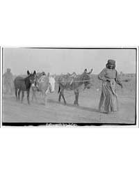 Indians. Person Leading Donkeys, Photogr... by Horydczak, Theodor