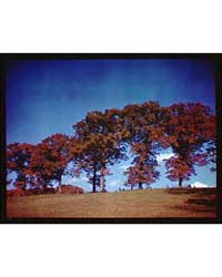 Trees. Red-leafed Trees I, Photograph 5A... by Horydczak, Theodor