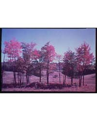 Vermont. Line of Trees in Vermont I, Pho... by Horydczak, Theodor