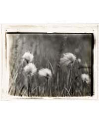 Wildflowers, Photograph Number 16706V by Johnston, Frances Benjamin