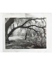 Middleton Place, John Julius Pringle Smi... by Johnston, Frances Benjamin