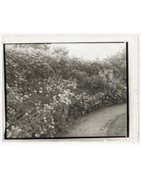 Unidentified House and Garden. Flowers A... by Johnston, Frances Benjamin