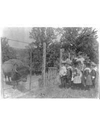 School Children Looking at Bison at Zoo,... by Johnston, Frances Benjamin