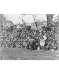 Quentin Roosevelt, Photograph Number 3A4... by Johnston, Frances Benjamin