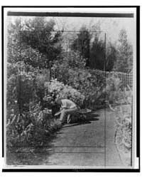 Gardener Kneeling to Tend Floral Border,... by Johnston, Frances Benjamin