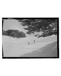 Cedars, Among Cedar Grove, Photograph 12... by Matson Photo Service