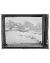 Cedars, Cedar Grove Showing View Through... by Matson Photo Service