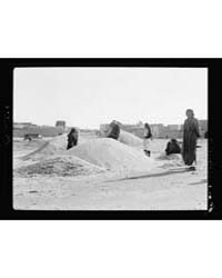 Agriculture, Etc. Piles of Millet Seed o... by American Colony Jerusalem