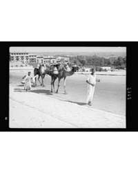 Egypt. Cairo. Types & Characters. Camels... by American Colony Jerusalem