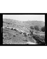 Bethlehem. the Town with Shepherd & Floc... by Matson Photo Service