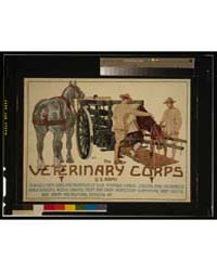 The Veterinary Corps, US Army, Teaches M... by Schreck, Horst
