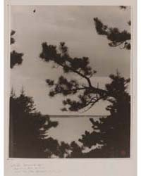 Pine Trees Against the Sky, Five Islands... by White, Clarence H