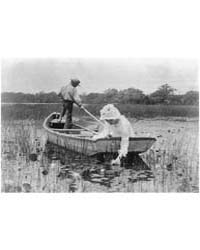 The Lily Gatherer, Photograph Number 3B3... by Eickemeyer, Rudolf