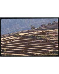 Sikkim, Dry Season, Rice Terraces, Photo... by Kandell, Alice S.