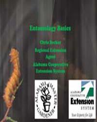 Entomology Basics by Becker, Chris
