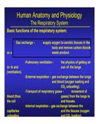 Human Anatomy and Physiology by Technical Books Center