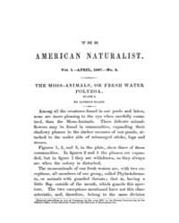 The American Naturalist : 1867 Vol. 1 No... Volume Vol. 1 by McPeek, Mark, A.