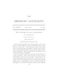 The American Naturalist : 1904 Vol. 38 N... Volume Vol. 38 by McPeek, Mark, A.